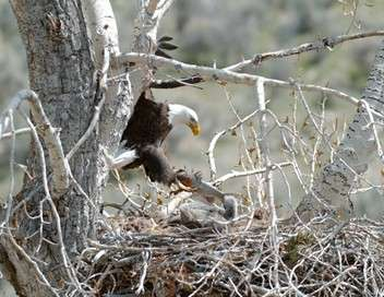 Yellowstone - Nature extrême