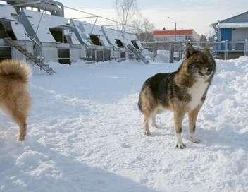 Moscou : les chiens renifleurs d'explosifs