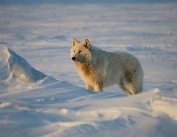 Canada, une aventure polaire en Arctique