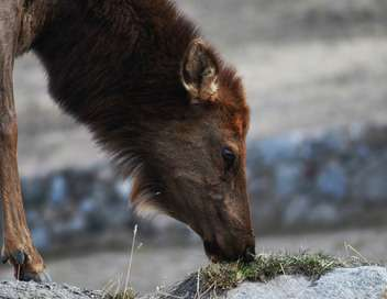 Mystérieuse disparition au Yellowstone