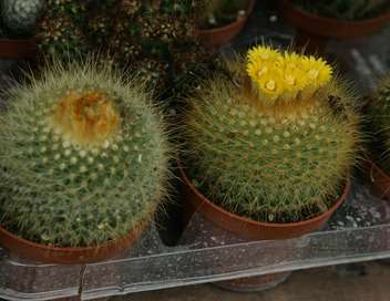 C'est pas sorcier Cactus : un sujet épineux