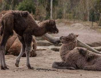 L'école des bébés animaux