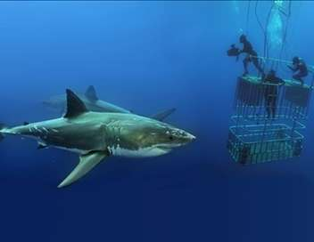 Les profondeurs marines