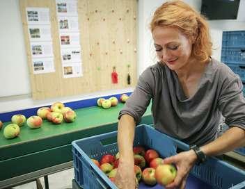 Xenius Pommes : l'apparence plutôt que la qualité ?