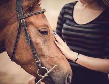 Xenius L'  équithérapie : quand le cheval se fait traducteur