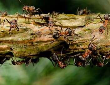 C'est pas sorcier Le génie des fourmis