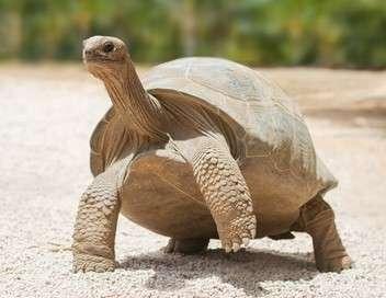 C'est pas sorcier Les tortues : quand les carapaces passent