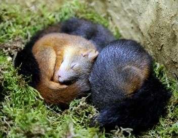 Écureuils, les acrobates de la forêt