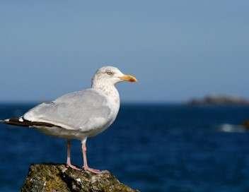 C'est pas sorcier Mouettes, goélands et cie : les oiseaux de mer