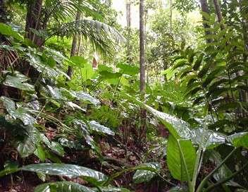 Ushuaïa nature L'esprit de la forêt