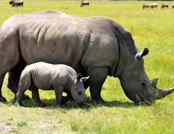 L'orphelinat des rhinos
