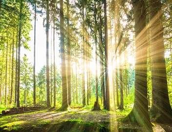 France terres sauvages : la forêt