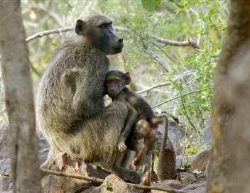 Le royaume des primates