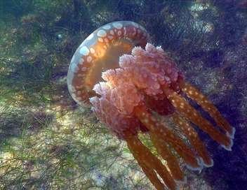Les merveilles sous-marines de l'Afrique