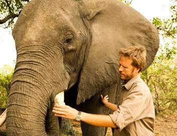 Dans la tête des éléphants