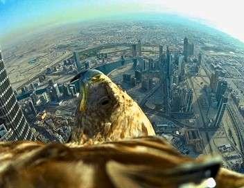 Freedom, un aigle à Dubaï
