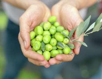 Xenius Bactéries et fraudes : menaces sur l'huile d'olive