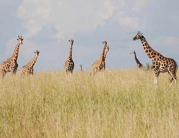 Au sommet de la girafe