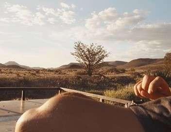 Sur la piste des lions du Namib