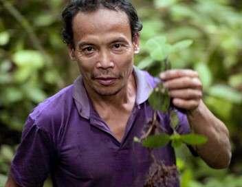 Bornéo, la forêt disparue