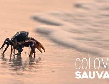 Colombie sauvage