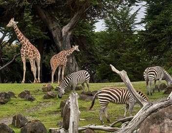Secrets de conso Out of Africa en Auvergne, le zoo de tous les records