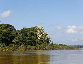 Enquête d'action Trafics, violence, pauvreté : la Guyane au bord de l'explosion