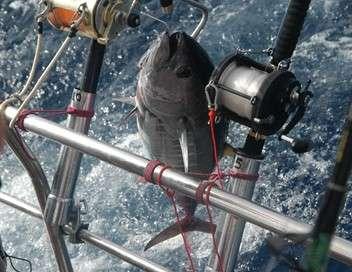 Galice, pêcheurs en danger