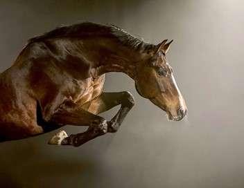 Equus, une histoire de chevaux et d'hommes