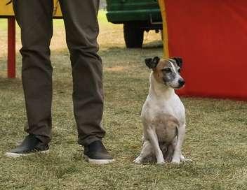Caninator 2
