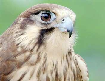 Les ailes sauvages d'Australie