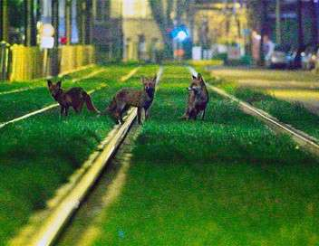 Bruxelles sauvage, faune capitale