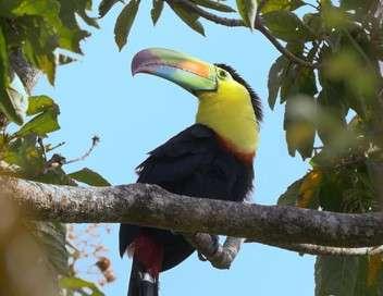 La vie sauvage du Costa Rica