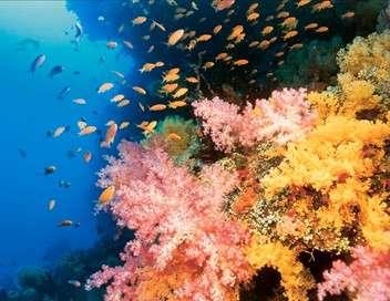 Expédition sur le récif de la Grande Barrière