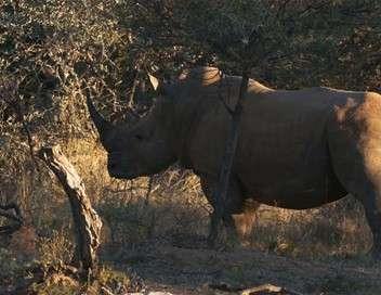 La terre des géants Eléphants et rhinocéros : une cohabitation complexe