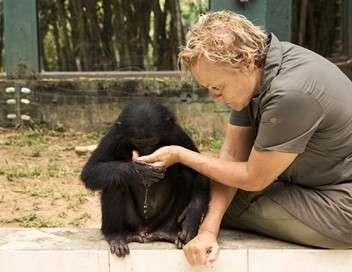 Le messager - Muriel Robin sur la terre des bonobos