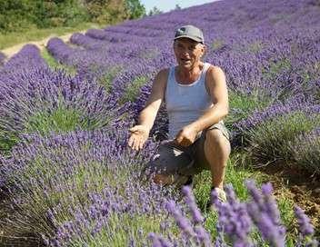 Les nouvelles aventures des plantes En Provence