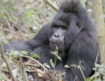 La terre des géants Gorilles et paresseux, deux styles opposés