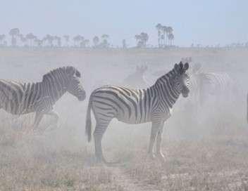 Okavango - Les meilleurs moments Une année en Afrique