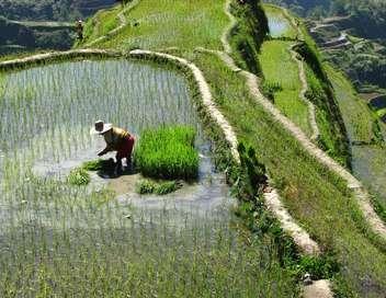 Petits sous, grandes rizières