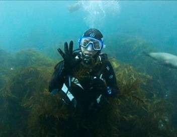 Track, plongées australiennes sous pressions