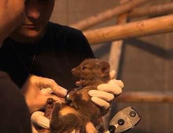 Zone interdite Les secrets du zoo le plus incroyable de France