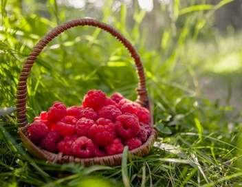 La quotidienne Les Fruits rouges