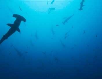 Plongée dans le grand bleu