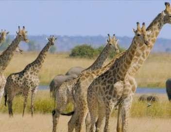 Les grands parcs d'Afrique