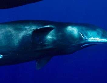 La terre des géants Requins et cachalots : survivre seul ou à plusieurs
