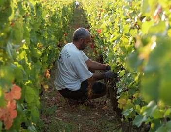 Échappées belles Bourgogne, terre de vignes
