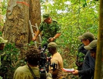 Eden vert : la guerre du bois