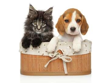 Bébés chats : les 100 premiers jours de leur vie Les histoires extraordinaires entre bébés chats et humains