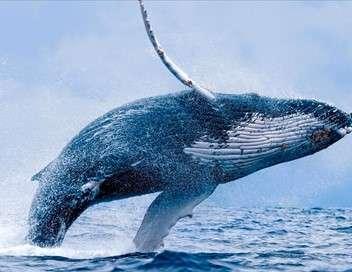 Sur le dos des baleines